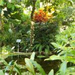 Das Tropenhaus: Wo die Schoki noch am Baum hängt