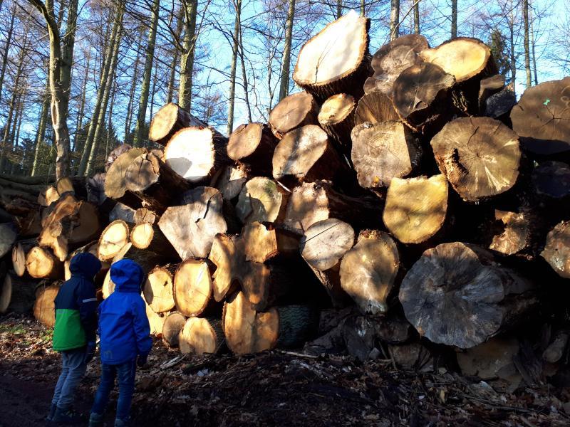 Lohof Forstbetrieb