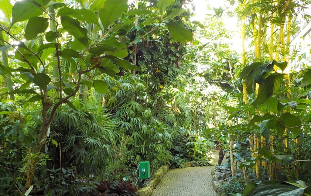 Weg durch das Tropenschauhaus