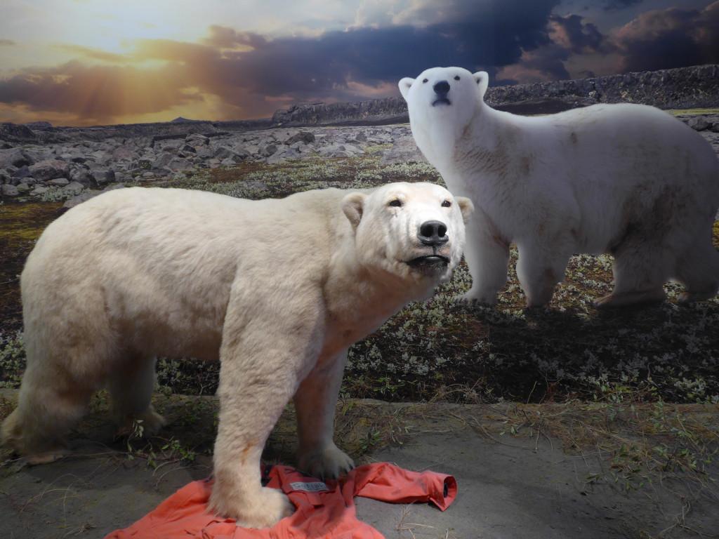 Eisbär im Zoologischen Museum Hamburg