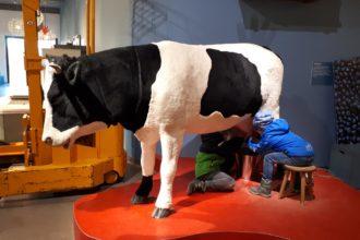 Freilichtmuseum am Kiekeberg Agrarium Kuh melken