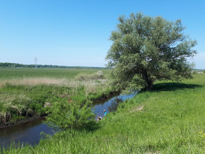 Fluss in der Winsener Elbmarsch