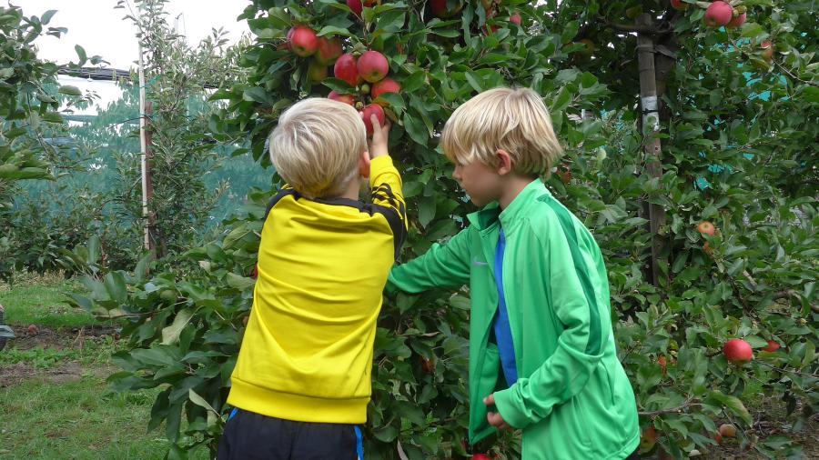 Jork Äpfel selber pflücken Kinder